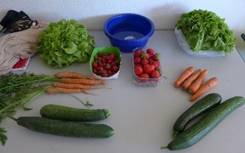 Atelier_légumes
